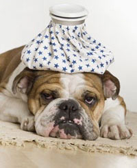 Lo que debes saber anter de operar a tu perro